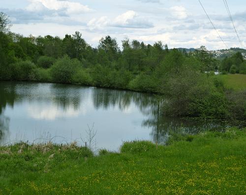 Bagger See - Natur pur - Angeln