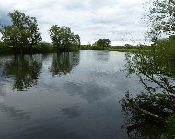 der Regen - Anglerfreunde Untertraubenbach